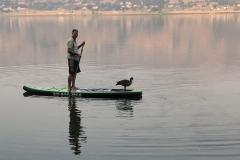Goose-Paddleboard